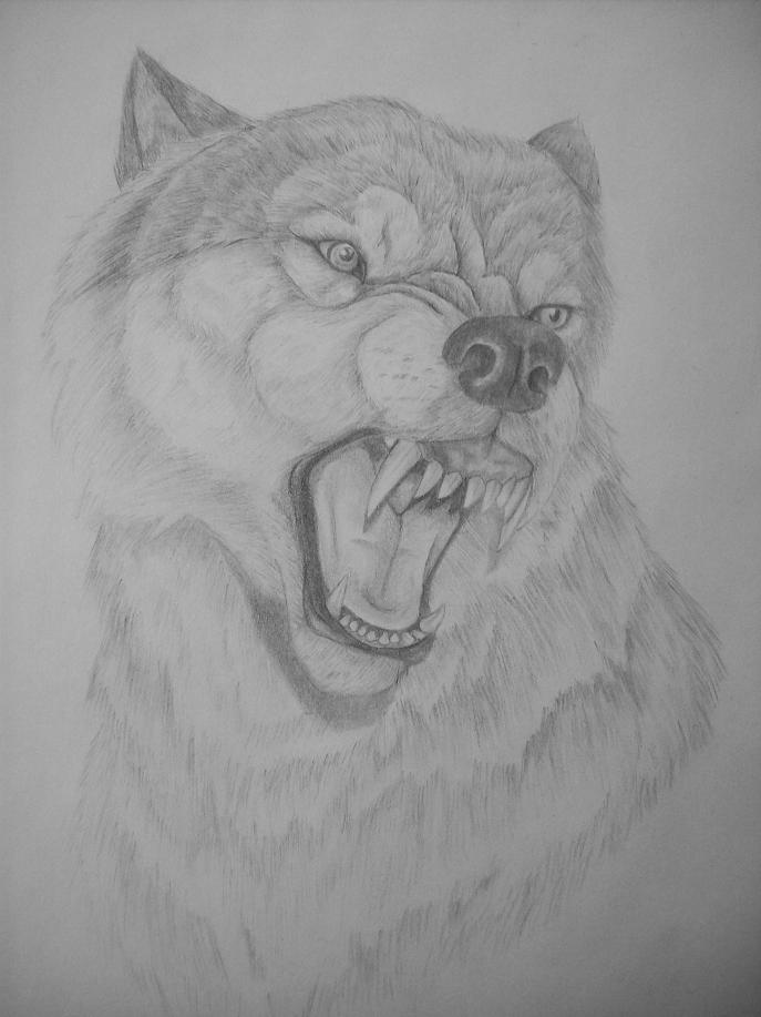 snarling-wolf-drawing